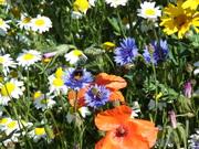 WildflowersAndInsects