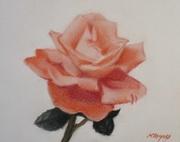 A Simple Orange Rose