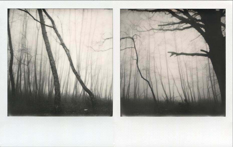 wood_