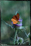 essere una farfalla