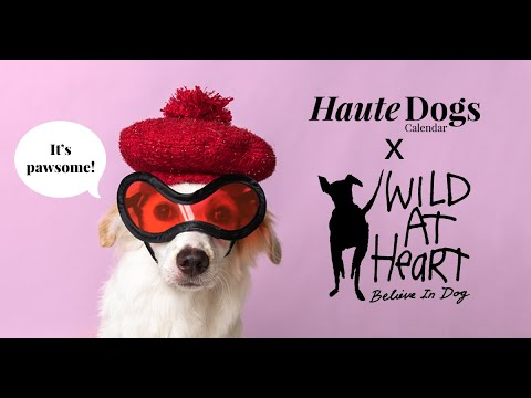 Haute Dogs x Wild At Heart Calendar 2021