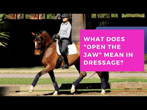 What Does It Mean To Open The Jaw In Dressage