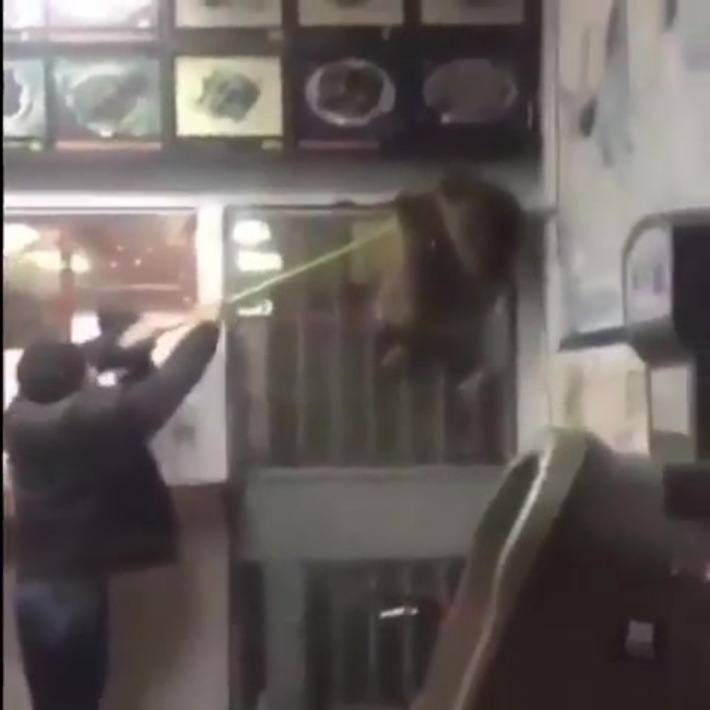 Raccoons try to break into a Chinese restaurant