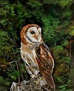Kara The Barn Owl