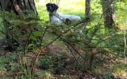 Le lièvre est au pied de l'arbre ...