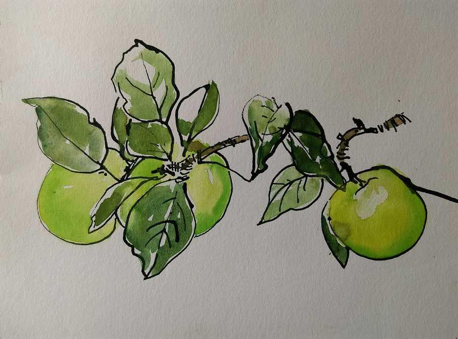 Apples from my Garden.  September 2020