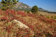 Smooth sumac and Flatirons