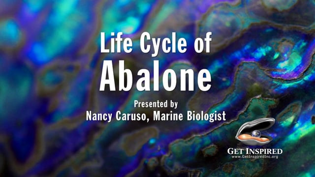 Movie-abalone anatomy and reproduction