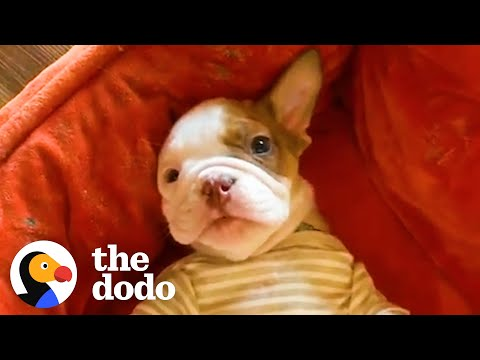Two-Legged Abandoned Puppy Learns To Run And Screams With Excitement | The Dodo