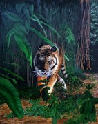 """""""Stealth"""" Tiger in the forest"""