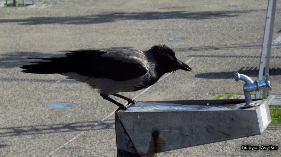 """THIRSTY BIRDS""…"