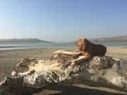 ჰარლი პლაჟზე