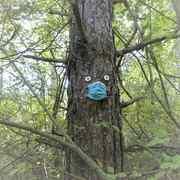 meme les arbres