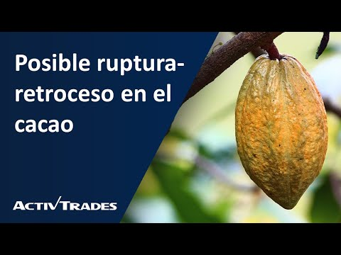 Posible ruptura-retroceso en el cacao