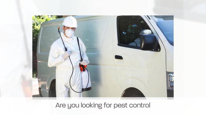 Bed Bug Exterminator Los Angeles