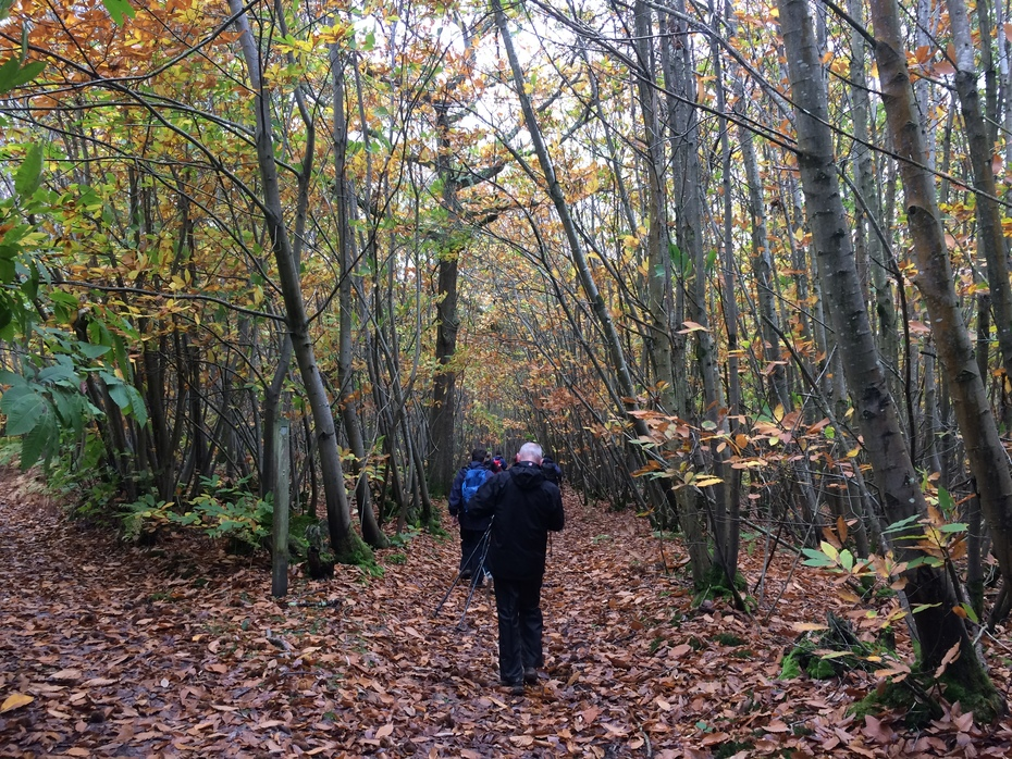 The Mens Nature Reserve from Pulborough 24.10.20