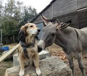 Obelix en Valentin