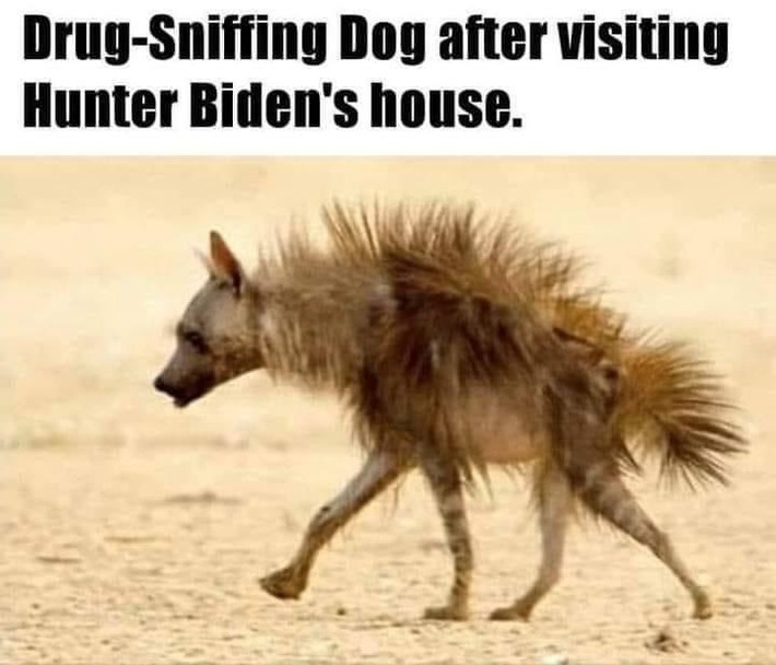 drug-sniffing-dog-biden