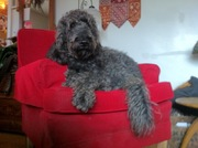 Oliver in the red chair