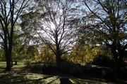 Park sunshine, Nov 4th '20