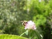 """kostenloser Onlinevortrag """"Tiere pflanzen- Wie die Artenvielfalt im Garten erhalten bleibt"""""""