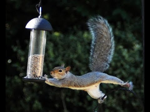 The Neverending Quest For the Squirell to Empty the Birdfeeder