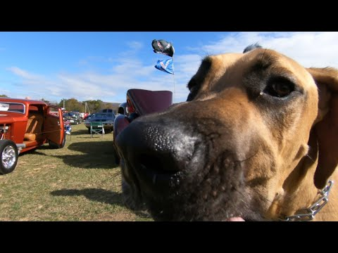 Rods and Wheels (2020) Ep-1- Went to a car show and met a Great Dane!