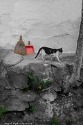 {Γάτες και χρώματα}
