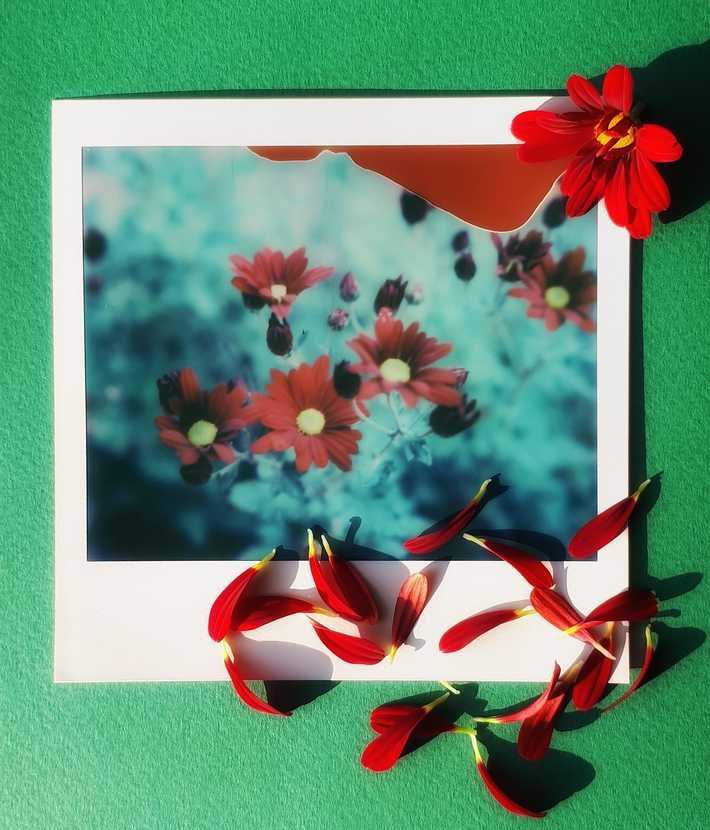Spectra Flowers
