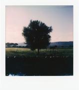 Albero solitario al mattino