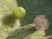 installazione virtuale nel mio giardino
