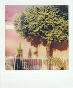 Albero su Muro Rosso
