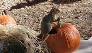 Squirrel hollow