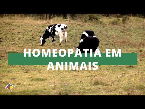 Dica Técnica: Tratamentos homeopáticos em animais - Homeopatia | Programa Terra Sul