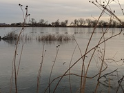 Frozen morning at Coot Lake