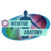 """Formation ThetaHealing """"anatomie intuitive"""""""