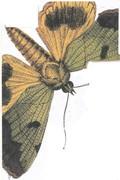 Kathy's moth 201226