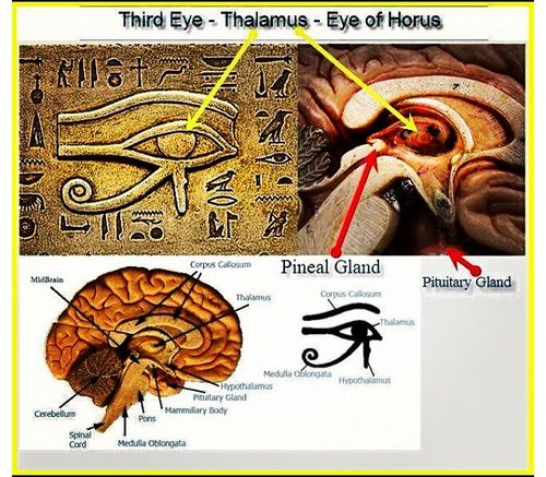 Third Eye And Psychedelics