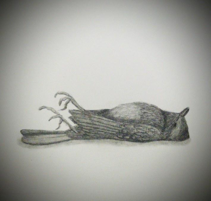 """Victorian"" Dead Robin"
