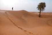 What is included in Desert Safari Dubai?