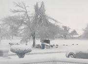 01 Jan 2021 - Geese get snow in OK!