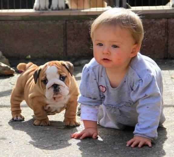 Carta de un perro viejo a su joven dueño