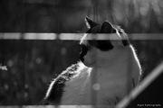 {Το GPS της γάτας}