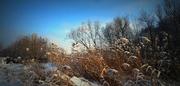 Téli szerenád