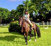 Bricole Reincke Horse Photos