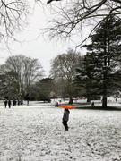 Snow in park 2021