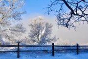 Hoar frost and fog in Boulder after snow storm