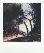 Paesaggio Mediterraneo Salentino