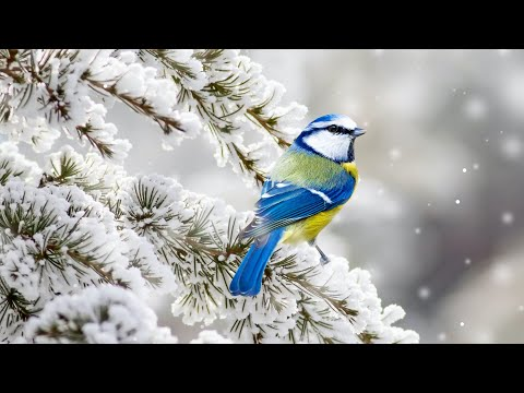 """Beautiful Relaxing Hymns, Peaceful Instrumental Music, """"Tuesday Morning Sunrise"""" By Tim Janis"""