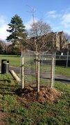 New Tree Jan 2021